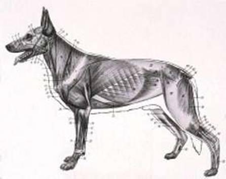 Bewegungsapparat Hund: Krankheiten und Probleme der Gelenke, Knochen ...